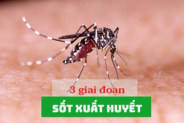 3 giai đoạn của bệnh sốt xuất huyết 1